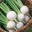 Turnip_brassica_rapa_white_ball_hybrid.thumb