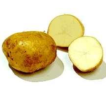 Potato, Katahdin