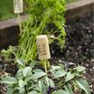 Herbs.thumb