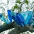 Bottle_tree.small