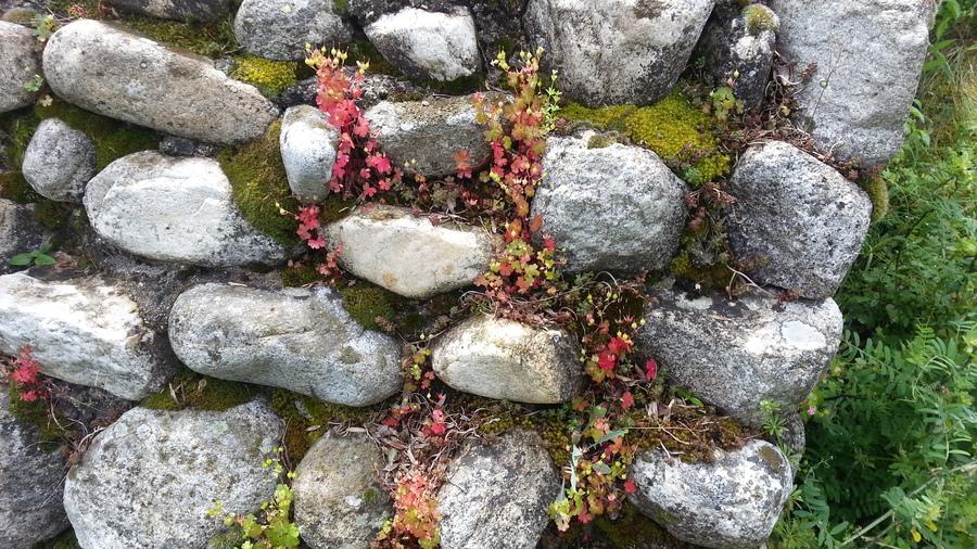 Stones-and-greenery.full