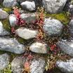 Stones-and-greenery.thumb