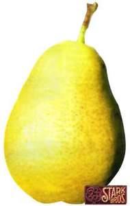 Pear Tree, Starking® Delicious™ dwarf