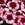 Dianthus: Dianthus chinensis 'Super Parfait™ Raspberry'