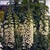 Foxgloves_digitalis_purpurea_camelot_tm_cream-1.small