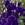 Lisianthus: Eustoma Grandiflora, 'Cinderella™ Blue'