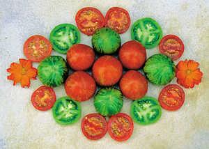 Tomato, Tigerella