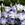 Lisianthus: Eustoma Grandiflora, 'Twinkle™ Blue Blush'