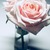 Antiques_roses.small