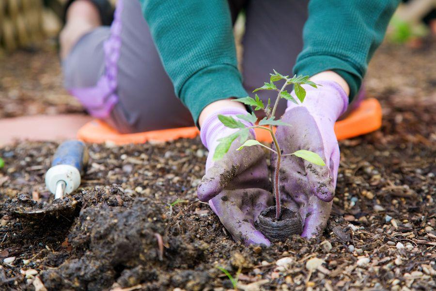 Gardening_gloves-1.full