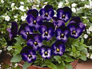 Marty Nemko: Best Garden Plants for the San Francisco Bay Area