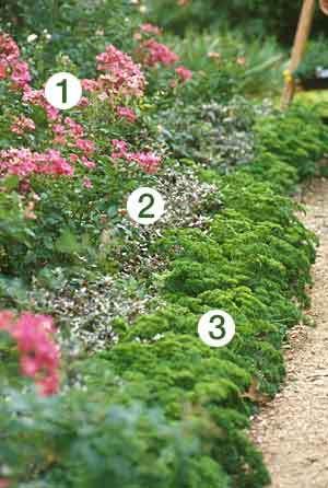 Fragrant Rose Borders