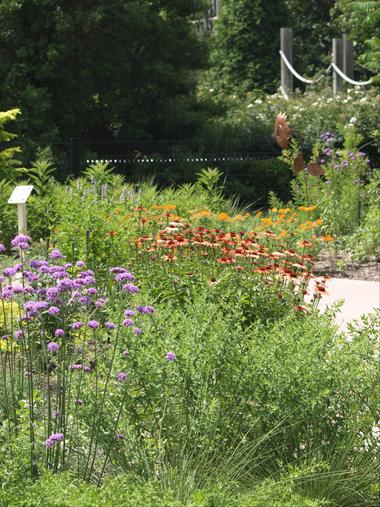 My Big Backyard - Memphis Botanic Garden